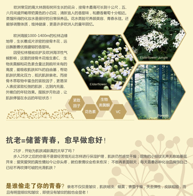 750内页设计-接骨木花系列_02